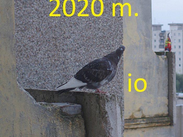 2020 balandžio mėnėsio rezultatai